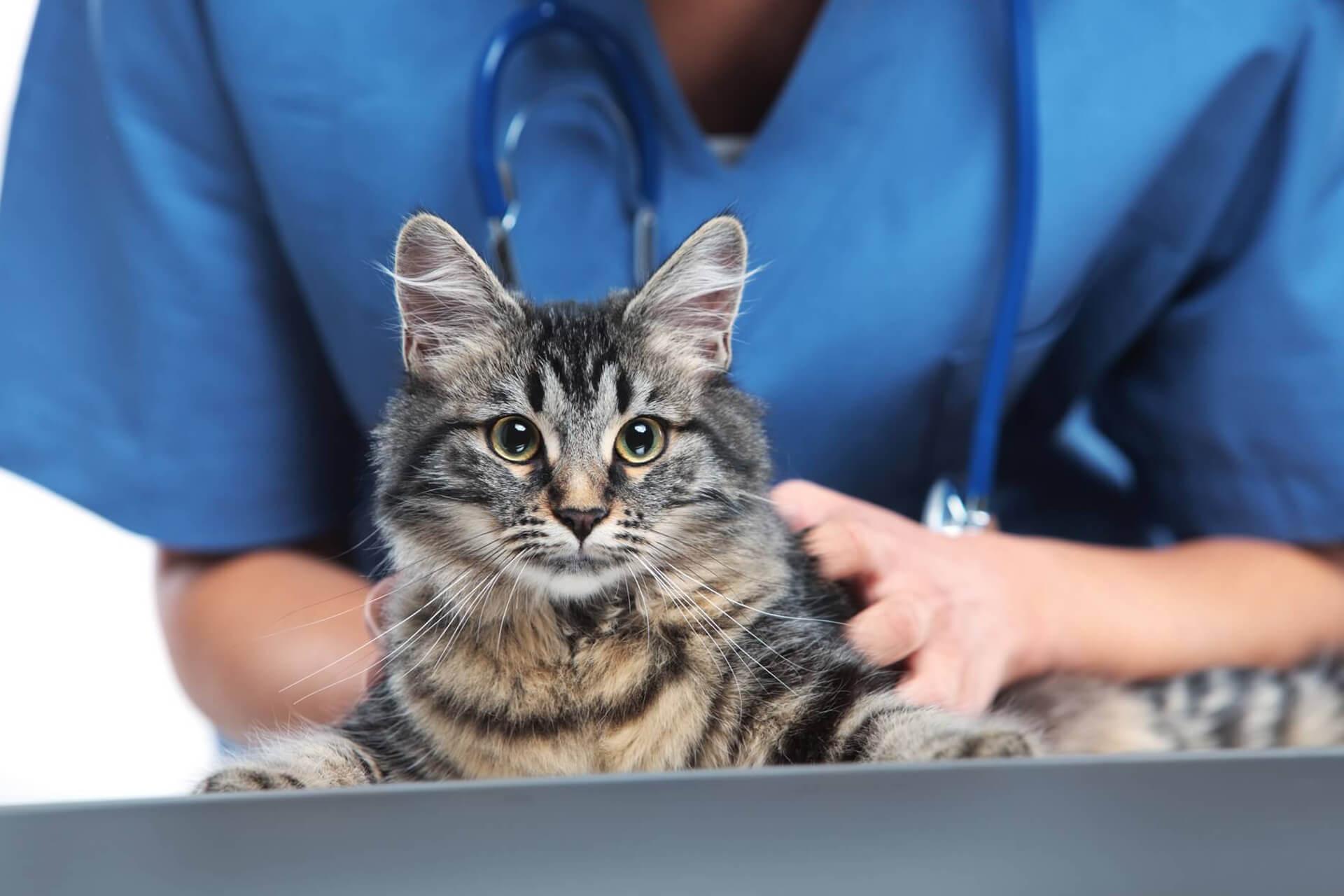 leczenie zwierząt towarzyszących